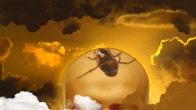 Soñar con Cucarachas en la cabeza
