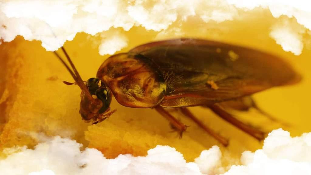 Qué significa soñar con Cucarachas en la comida