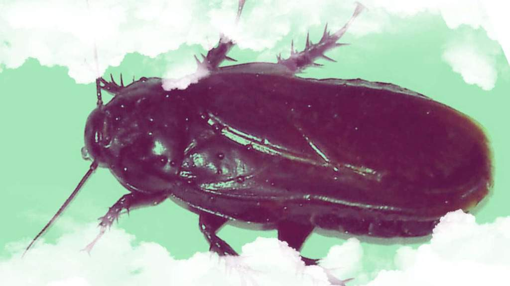 Qué significa soñar con Cucarachas enormes