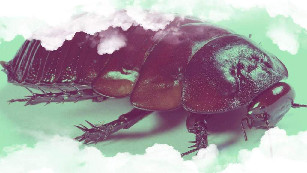 Soñar con cucarachas grandes