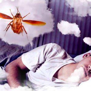 Soñar con cucarachas voladoras