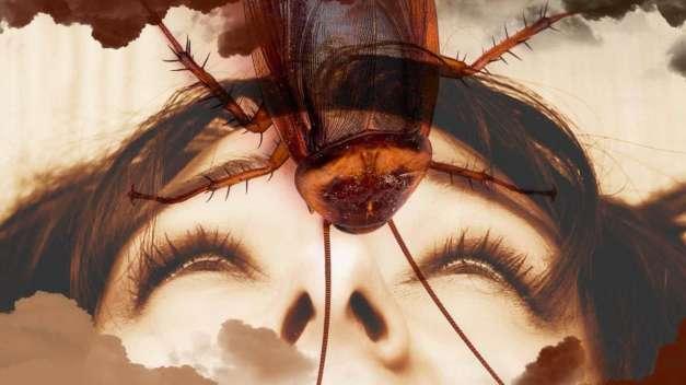 Soñar con Cucarachas en el cuerpo