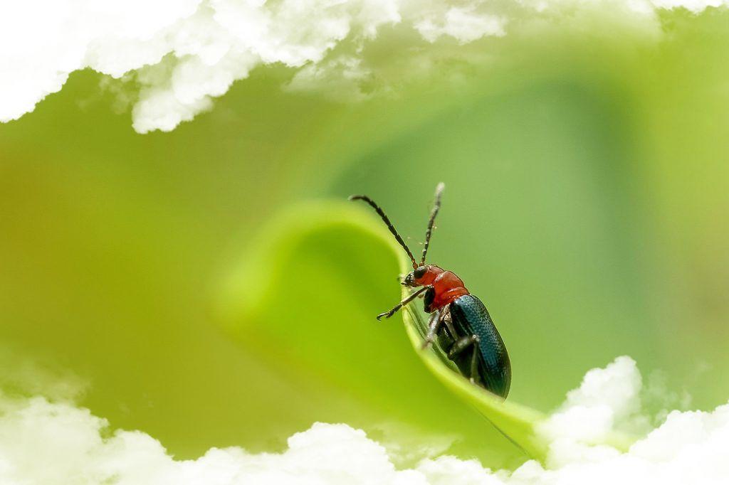 Simbolismo del Escarabajo