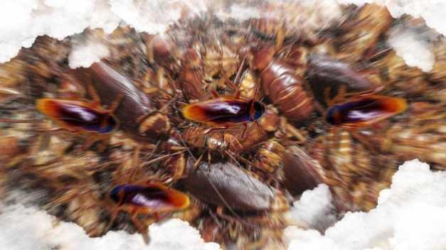 Soñara con una invasión de cucarachas
