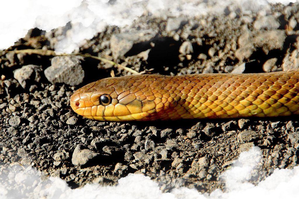 Significado general de los sueños sobre las serpientes