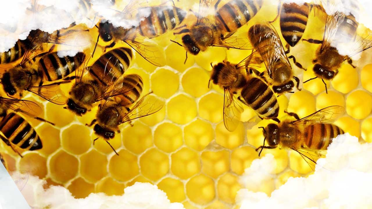 Sueños con abejas