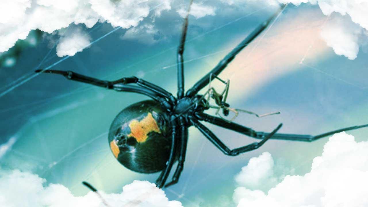 Significado de los sueños con arañas
