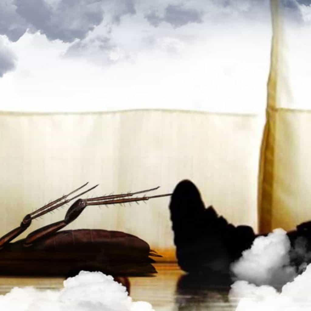 Soñar con cucarachas muertas