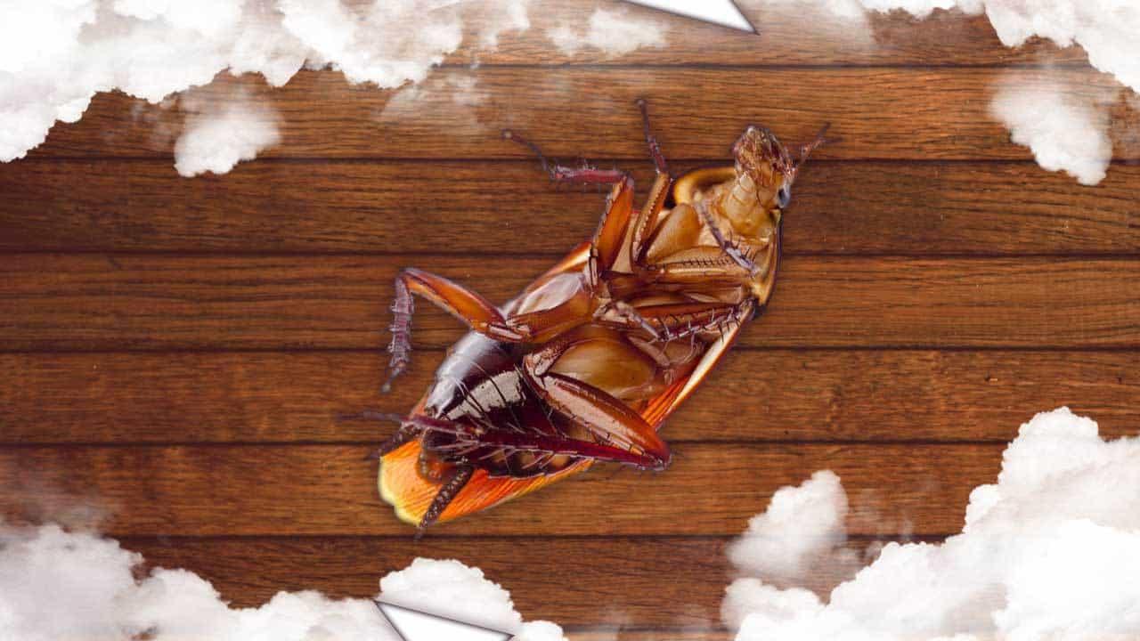 Que significa soñar con Cucarachas vivas