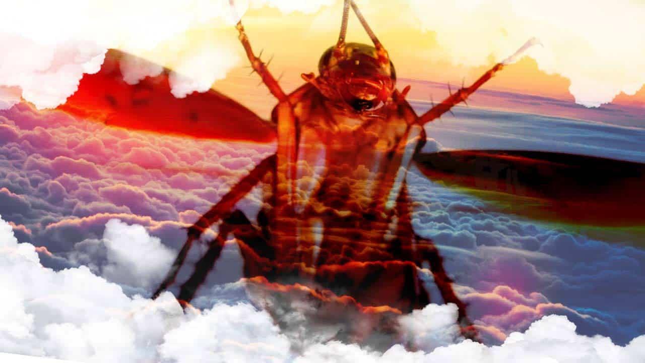 Sueños con Cucarachas volando