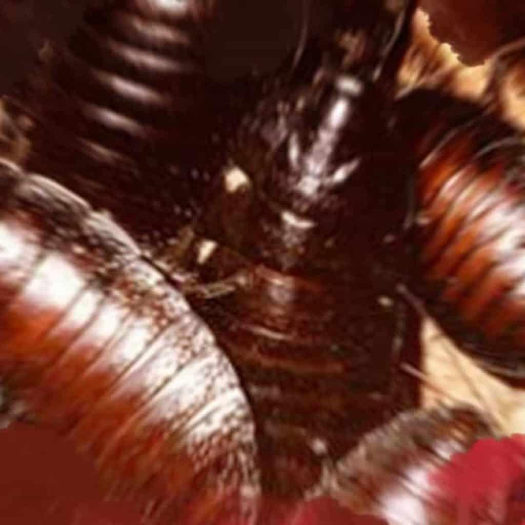 Soñar con una invasión de cucarachas