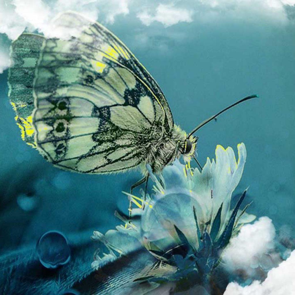 Soñar con Mariposas y significado