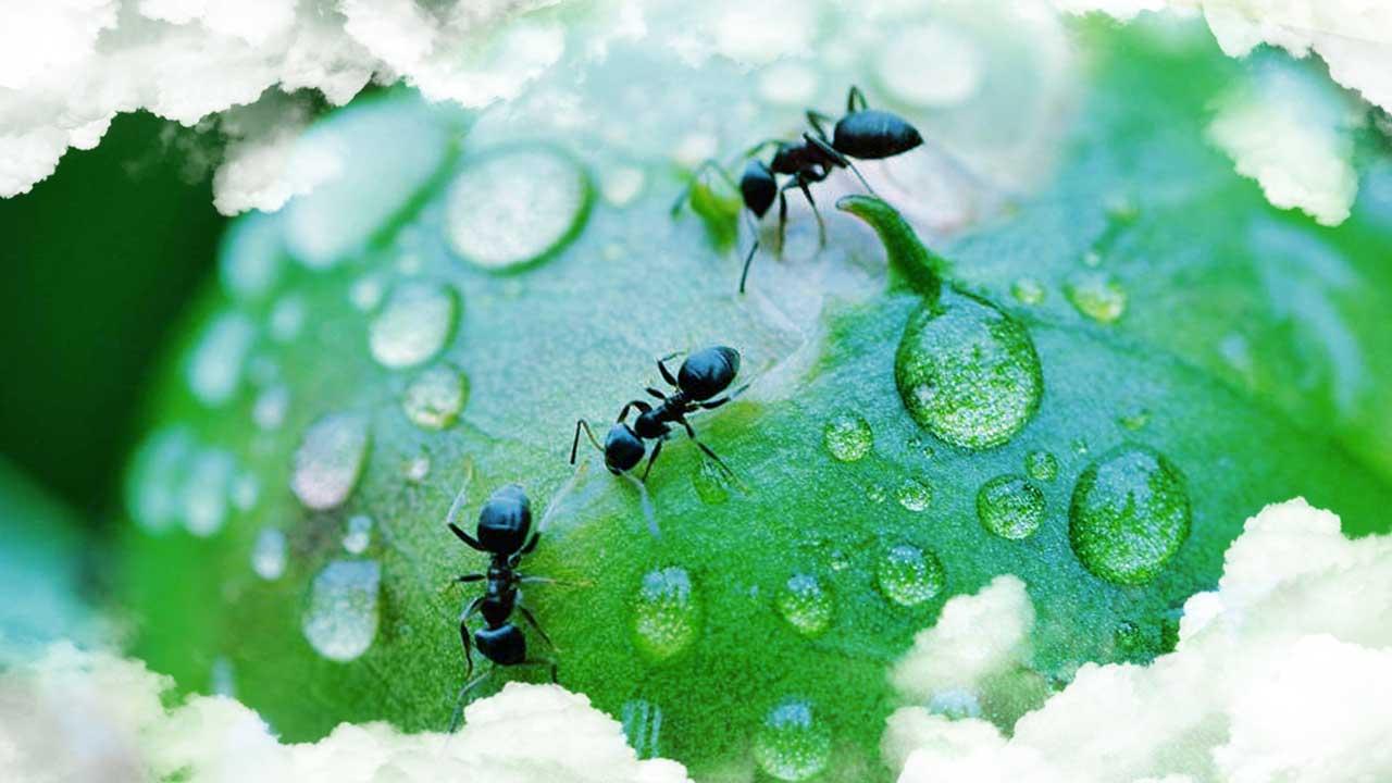 Significado de los sueños con hormigas