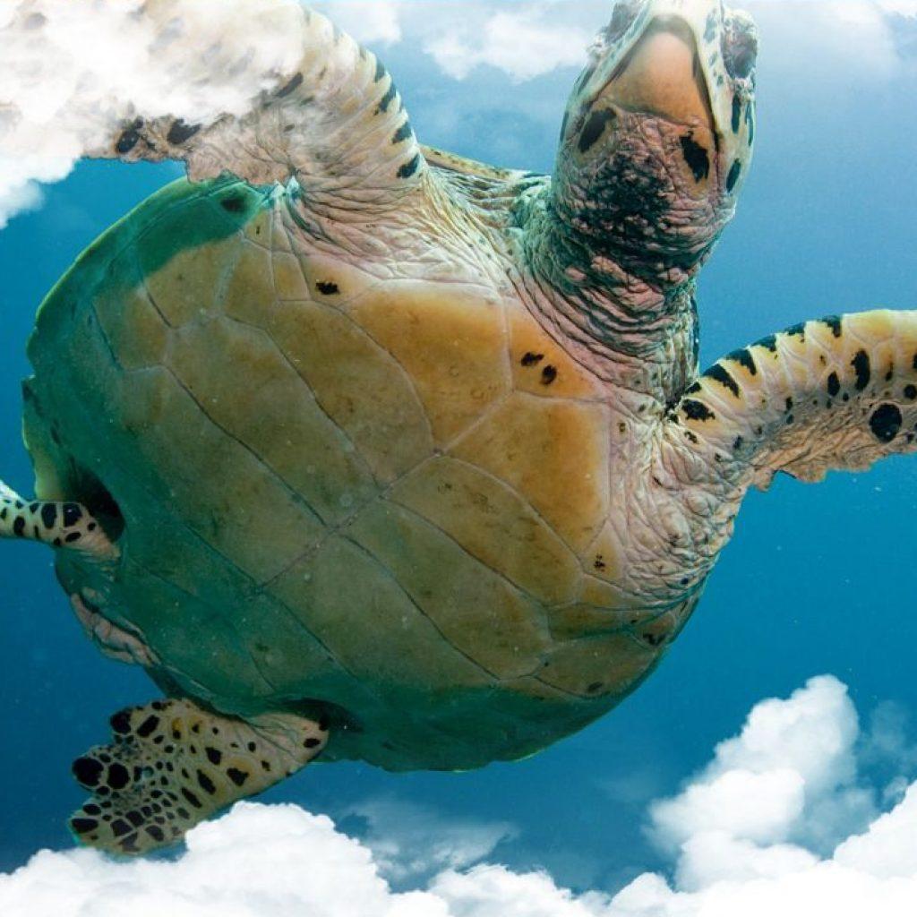 Soñar con Tortugas y su significado