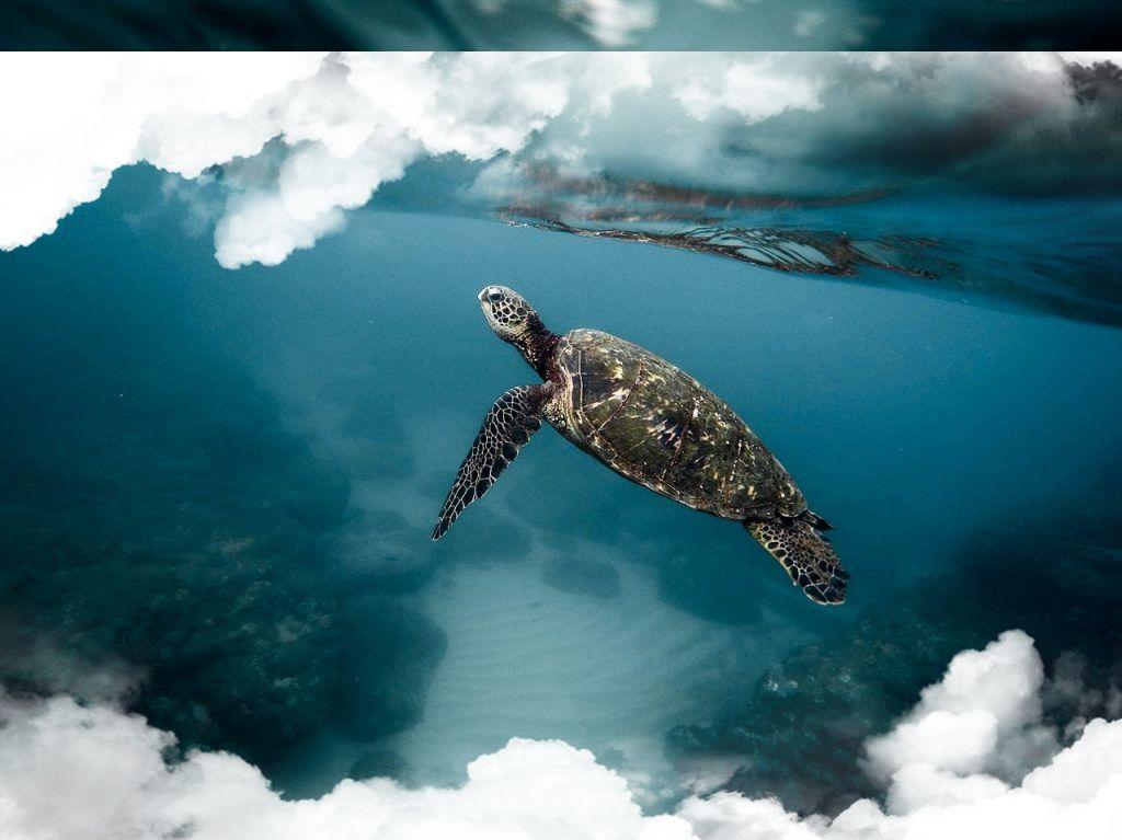 diferentes tipos de tortugas en tu sueño