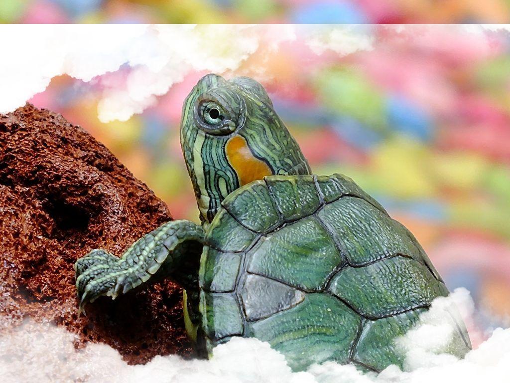 Simbolismo de las tortugas en los sueños