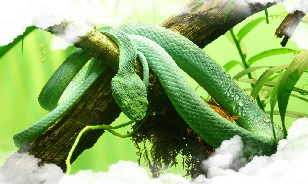 Soñar con Viboras y Serpientes